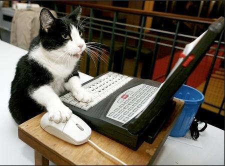 gato surfeando la web