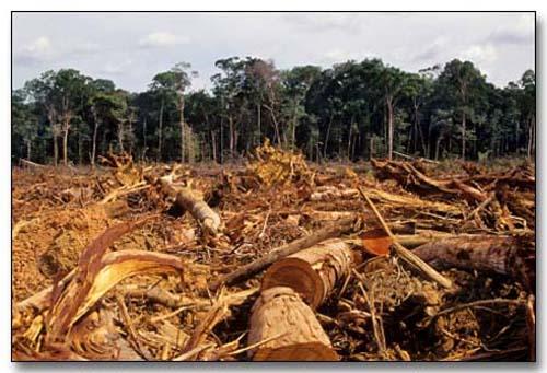 Deforestación-Google imágenes